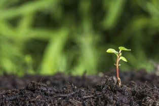 pianta-crescita