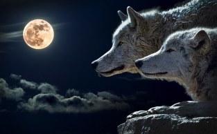 wolf-547203__340.jpg